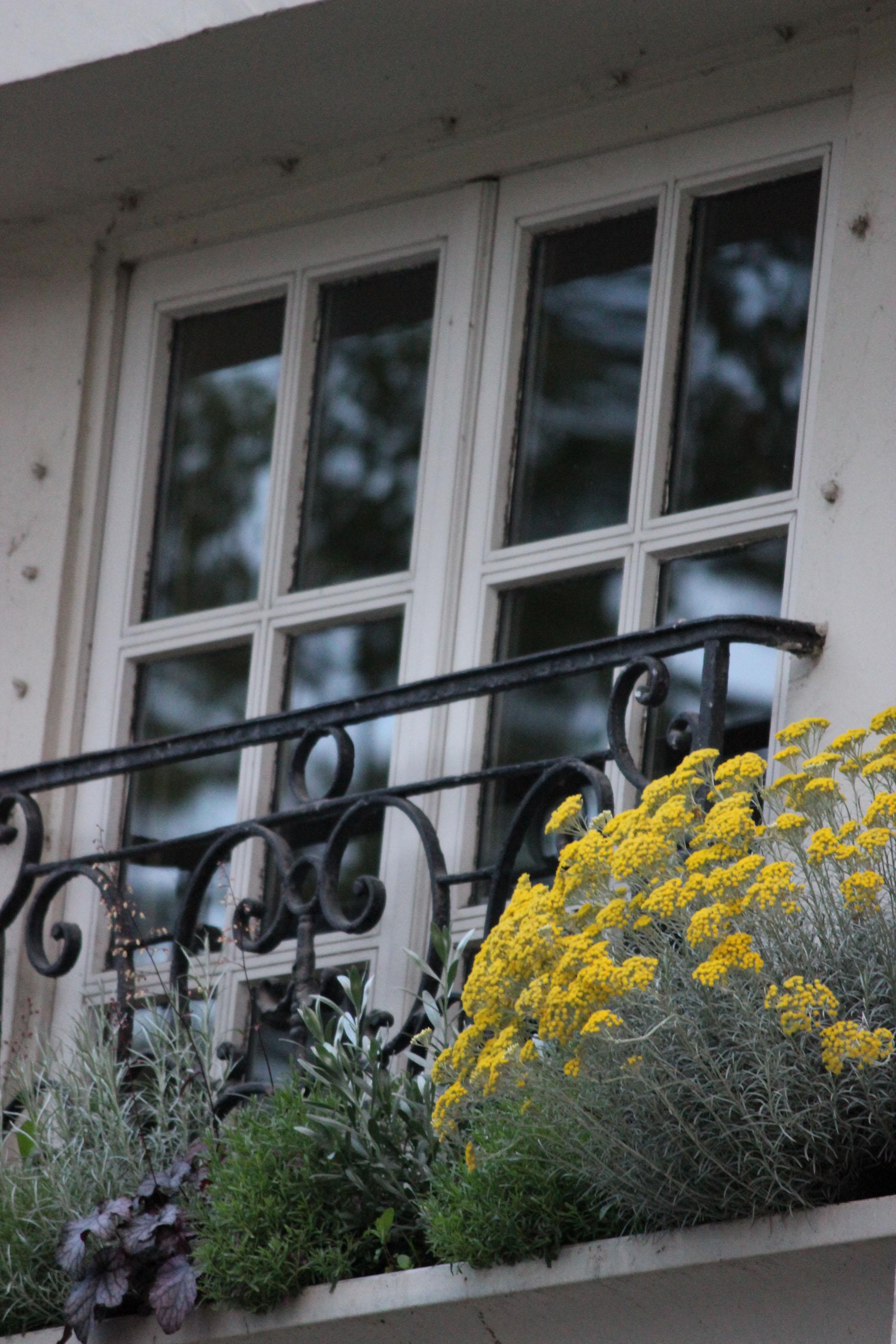 Photographie - Paris - Fenêtre sur rue fleurie sur l'île Saint Louis - Violaine Martin Créations - Design textile - tissage jacquards, unis et velours - aquarelles botaniques - Hauts-de-France
