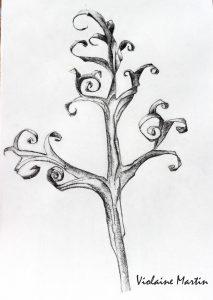 Etude n°2 d'une oeuvre de Karl Blossfeldt au fusain - 1997 - Violaine Martin Créations - Design textile - tissage jacquards, unis et velours - aquarelles botaniques - Hauts-de-France
