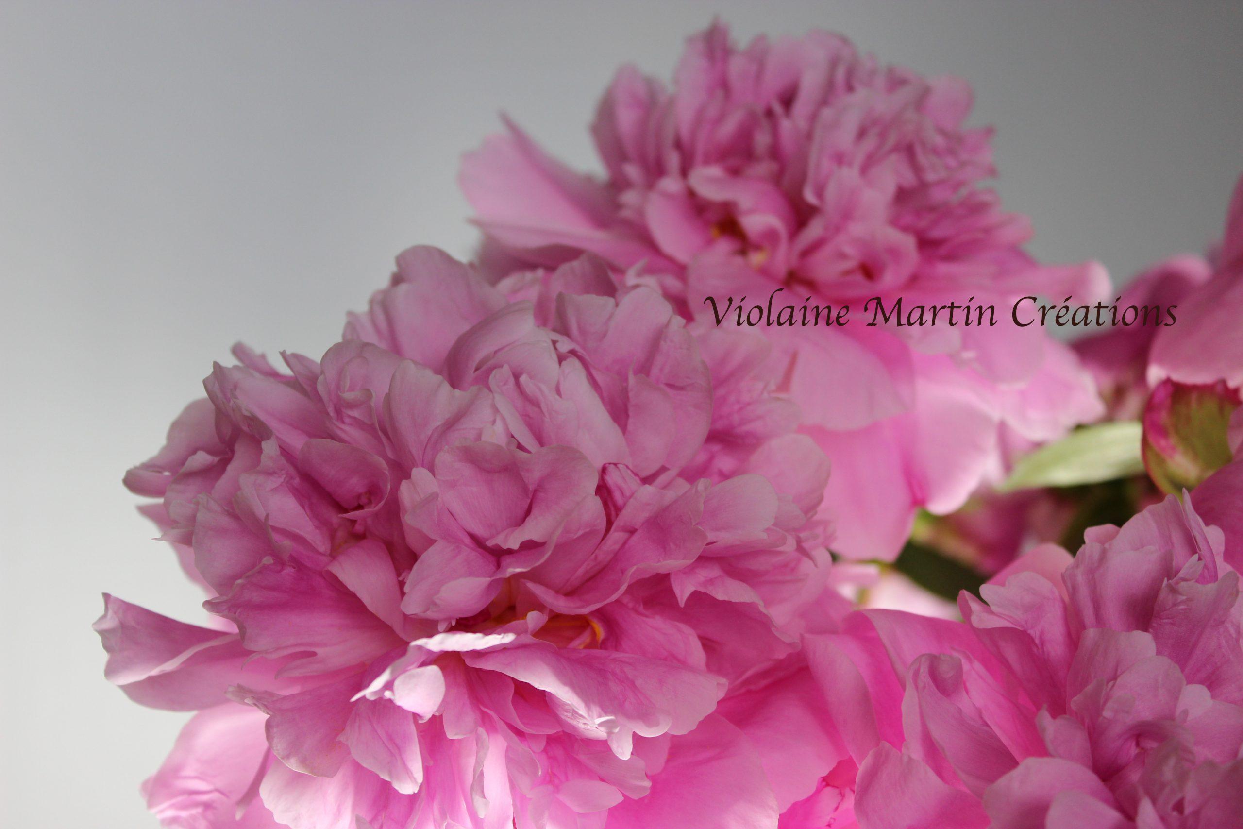 Photographie - pivoines - Violaine Martin Créations - Design textile - tissage jacquards, unis et velours - aquarelles botaniques - Hauts-de-France