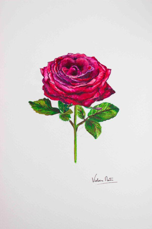 Aquarelle botanique - rose rouge - Violaine Martin Créations - Création textile - tissage jacquards, unis et velours - Hauts-de-France