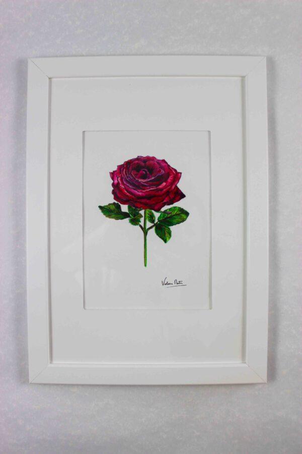 Aquarelle botanique avec cadre blanc- rose rouge - Violaine Martin Créations - Création textile - tissage jacquards, unis et velours - Hauts-de-France