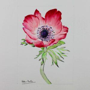 Aquarelle botanique - anémone rouge écarlate - Violaine Martin Créations - Design textile - tissage jacquards, unis et velours - aquarelles botaniques - Hauts-de-France