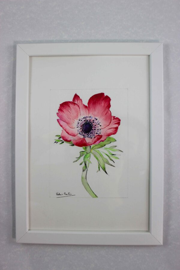 Aquarelle botanique - anémone rouge écarlate encadrée - Violaine Martin Créations - Design textile - tissage jacquards, unis et velours - aquarelles botaniques - Hauts-de-France