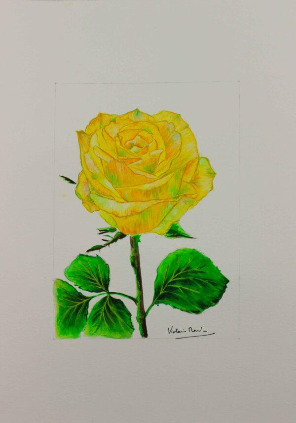 Aquarelle botanique - rose jaune citron - Violaine Martin Créations - Design textile - tissage jacquards, unis et velours - aquarelles botaniques - Hauts-de-France