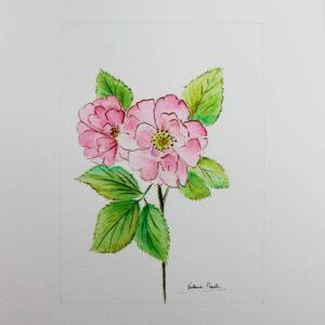 Aquarelle botanique - Rose sauvages - Violaine Martin Créations - Création textile - tissage jacquards, unis et velours - Hauts-de-France