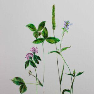 Aquarelle botanique - Herbes sauvages et fleurs des champs - Violaine Martin Créations - Création textile - tissage jacquards, unis et velours - Hauts-de-France